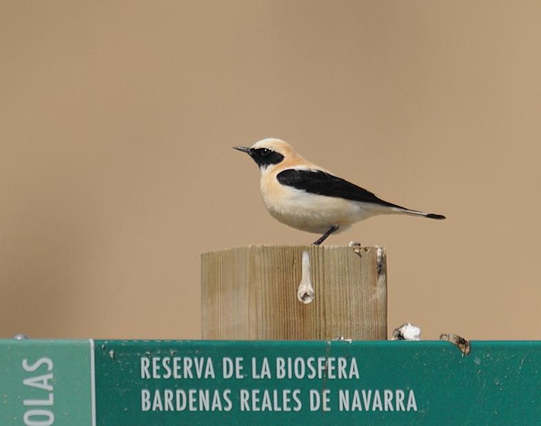 12-04-17-bardenas-03.jpg