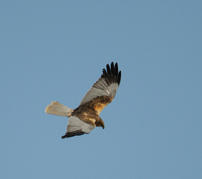 12 04 20 bardenas male 01