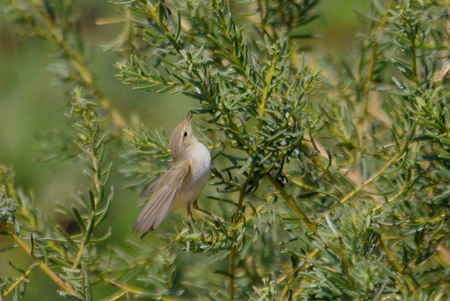 17 03 25 eilat birding center 01