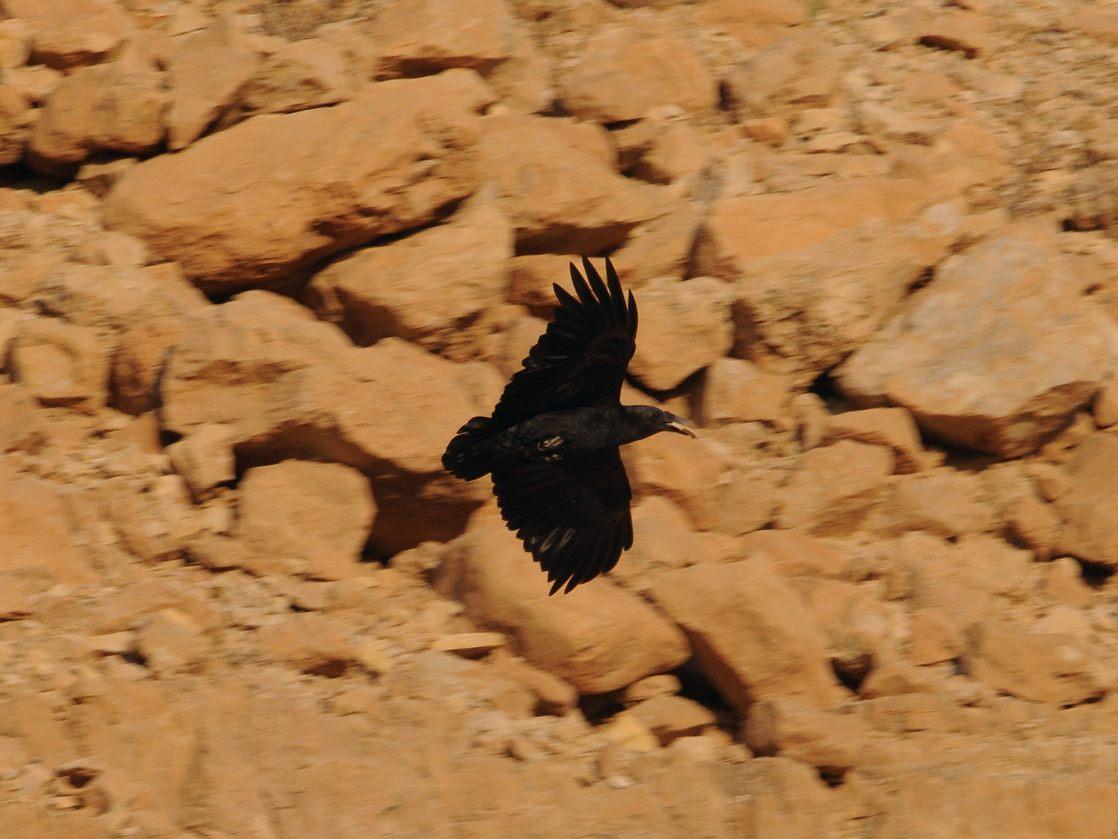 1703 24 wadi mishmada 05