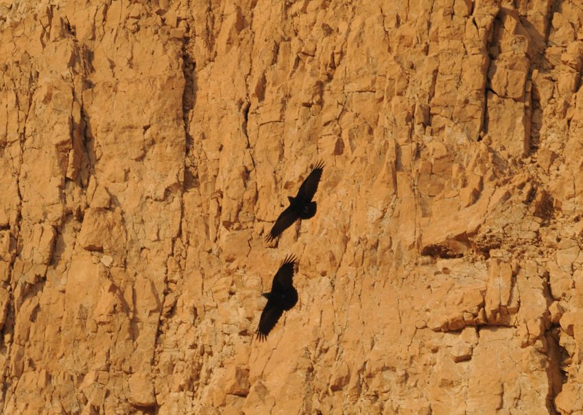1703 24 wadi mishmada 06