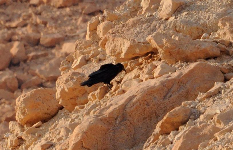 1703 24 wadi mishmada 3