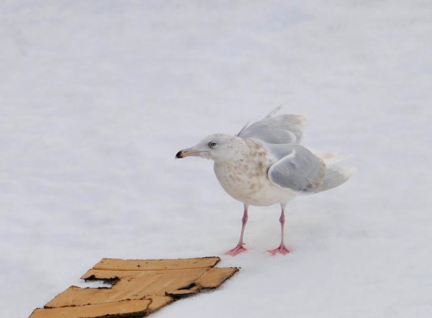 3eme hiver 15 03 14 vardo 02