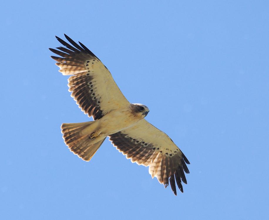 aigle-botte-clair-dessous-gratte-poitrine-12-05-24-villalpando-02-1.jpg