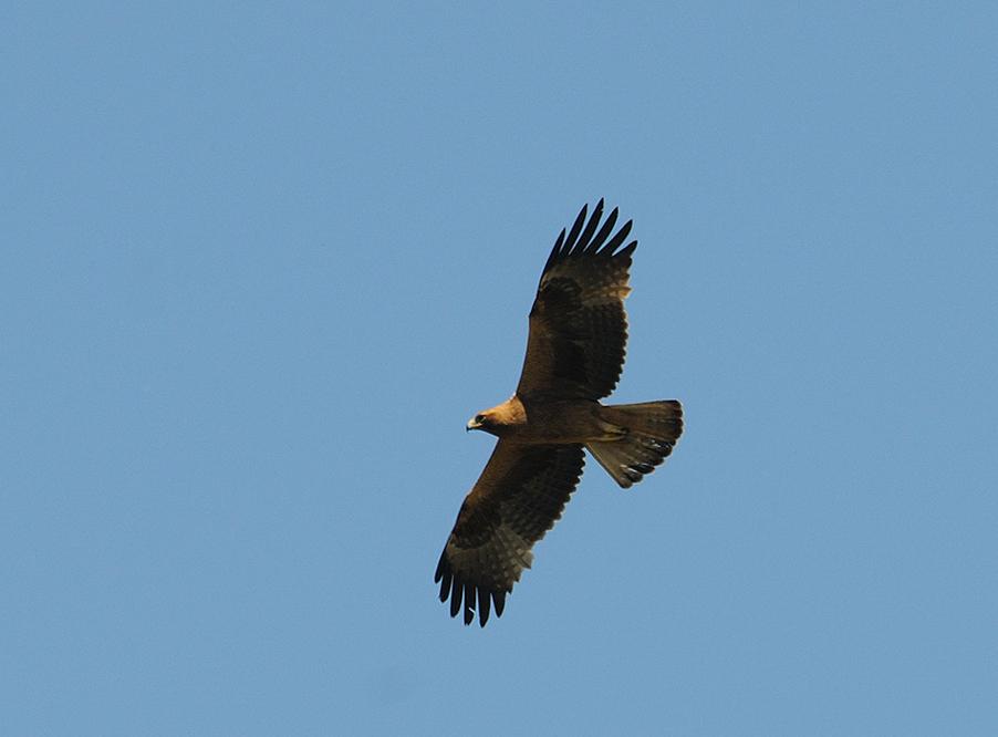 aigle-botte-sombre-face-12-05-24-villalpando-02-1.jpg